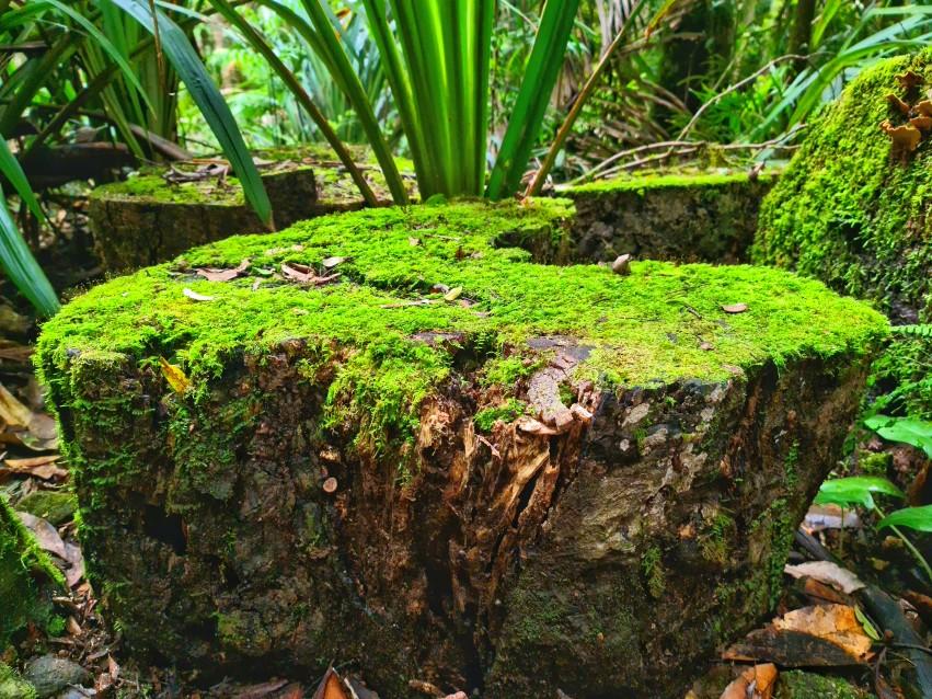 Nature / Plants